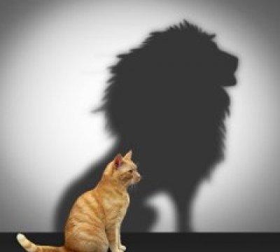 Applying the Power-Fear Cultural Paradigm