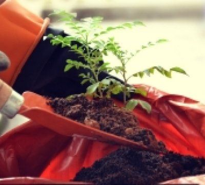 How to nurture a thriving Organizational Culture